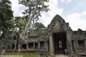 RED_005_Árvores_de_Angkor