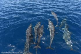 RED_011_Muitos_golfinhos_em_Savo