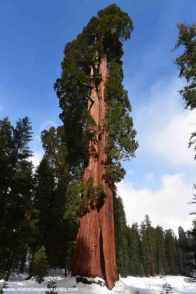 RED_010_Sequoia_National_Park