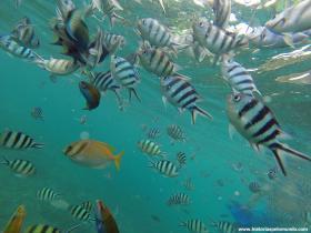 RED_001_Snorkeling_em_Koh_Tao