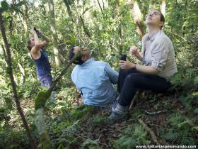 RED_004_Observando_os_gorilas_no_alto_da_árvore