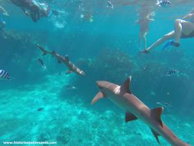 RED_009_Frente_a_frente_com_os_tubarões