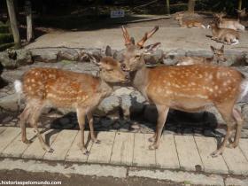 RED_004_Nara_Park