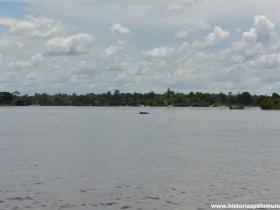 RED_002_Golfinho_escondido_no_rio_(Four_Thousand_Islands)